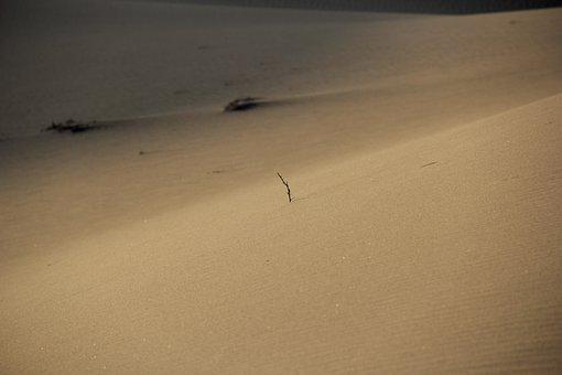 Desert, Sand, Surface, Morning, Branch