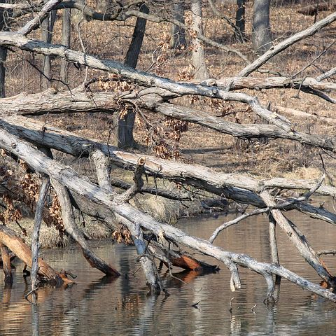 Tree Water, Toppled, Fell Over, Spring, Lake