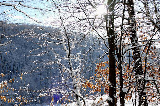 Winter, Dried Leaves, Snow, Sky, Tree, Sun