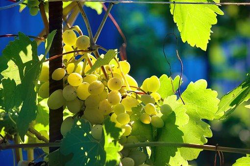 Grapes, Vine, Plant, Fruit, Food, White Grapes