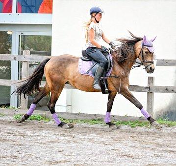 Horse, Girl, Horseback Riding, Riding Lesson, Gallop