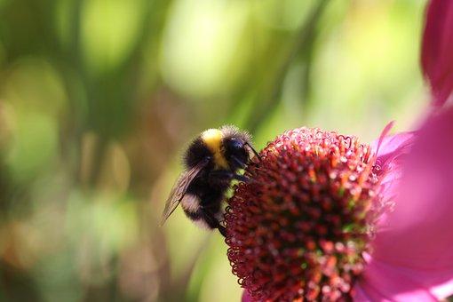 Flower, Hummel, Insect, Blossom, Bloom, Animal, Garden