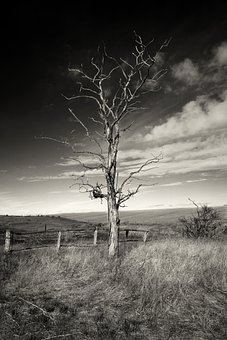 Tree, Farm, Rural, Countryside, Abandoned, Nature