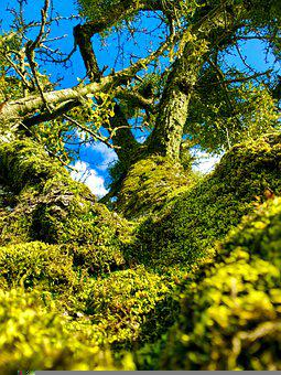 Tree, Bark, Moss, Plants, Nature, Wood, Green, Rural