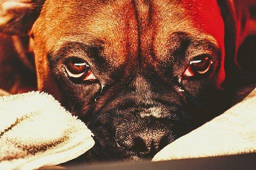 Dog, Face, Puppy, Pet, Animal, Portrait, Cute, Snout