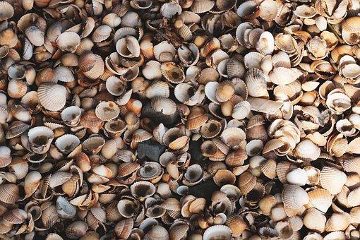Shells, Beach, Collection, Seashells, Heap, Natural