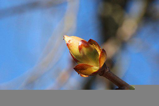 Tender, Blossom, Bloom, Tree, Nature, Spring, Flora