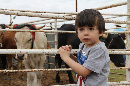 Child, Boy, Cows, Kid, Young, Cute, Cattle, Livestock