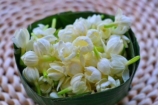 Jasmine, Flowers, Leaf Bowl, White Flowers, Petals