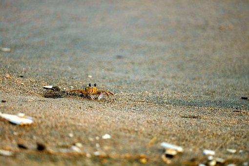 Crab, Sea, Ocean, Crustacean, Marine, Costa, Nature
