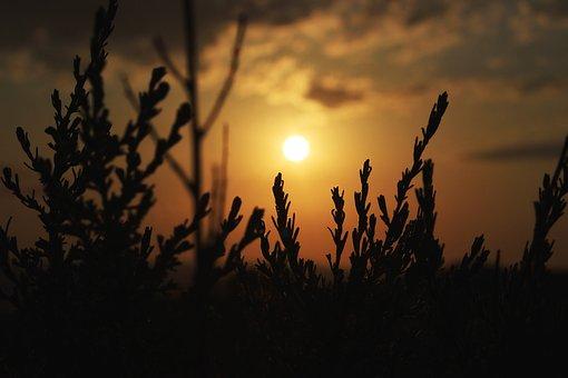 Landscape, Dawn, Morning, Sky, Nature, Mood, Field, Fog