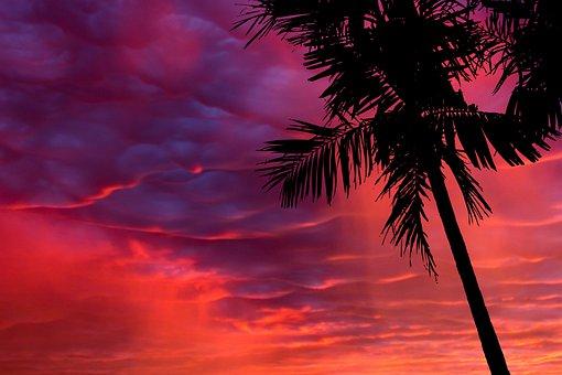Palm, Silhouette, Beach, Tropical, Summer, Nature