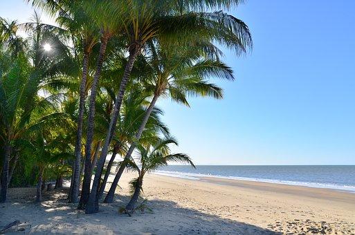 Beach, Palm Trees, Sea, Ocean, Coast, Seashore, Shore