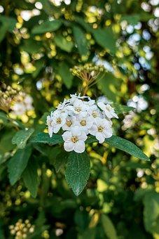 Nature, Flower, Petals, Dandelion