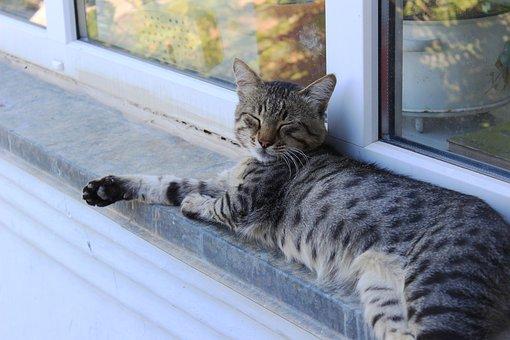 Cat, Village, Positive, Summer, Animals, Dacha