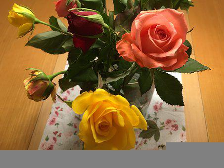 Roses, Flowers, Close Up, Spring, Mother's Day