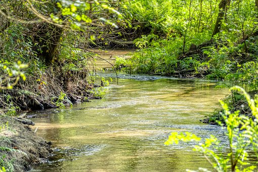 River, Plants, Forest, Spring, Stream, Creek, Water