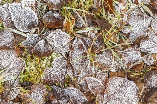 Ground, Frozen, Water, Ice, Frost, Water Frozen