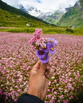 Mountains, Snow, Flowers, Valley, Swiss Alps, Alpine