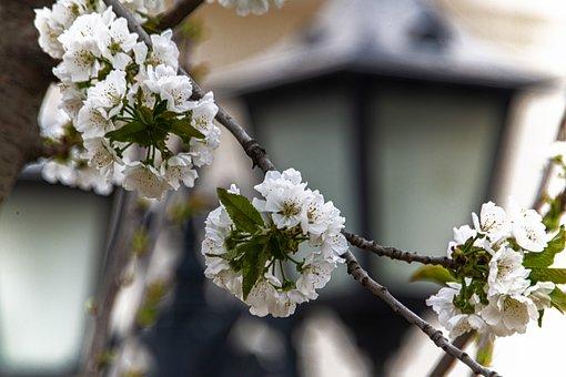 Spring, Flower, Flowers, Flowering, In Full Bloom