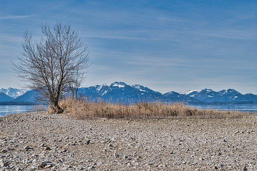 Mountains, Lake, Beach, Shore, Tree, Bare Tree, Reeds