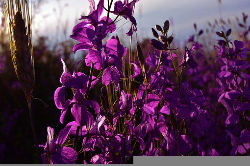 Flower, Garden, Spring, Nature, Color, Vegetation