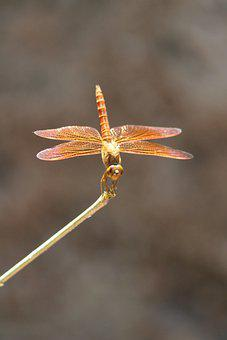 Dragonfly, Insect, Bug, Wings, Plant, Wildlife, Nature