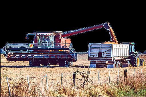 Wheat, Harvest, Agriculture, Farm, Summer, Field, Rural