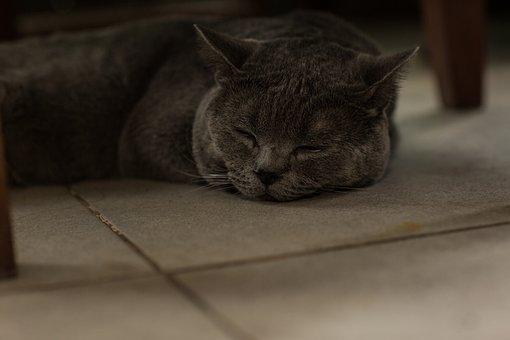 Cat, Pet, Sleeping, Rest, Asleep, Animal, Domestic Cat