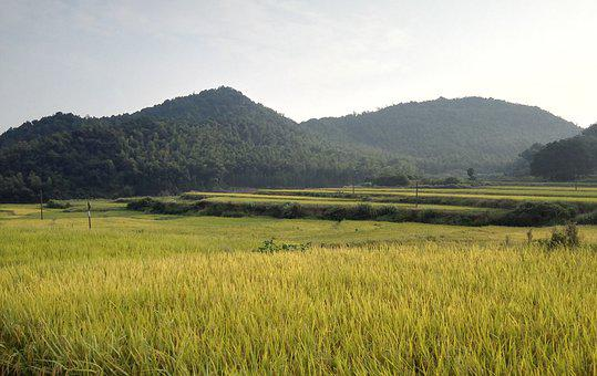 Countryside, Scenery, In Rice Field