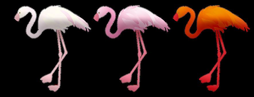 Flamingos, Birds, Animals, Water Birds, Wildlife, Beak