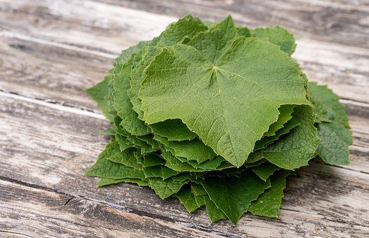 Wine Leaf, Leaf, Ingredient, Plant, Nature, Cook, Food