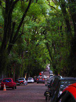 Street, Greens, Trees, Brazil, Porto Alegre, Road