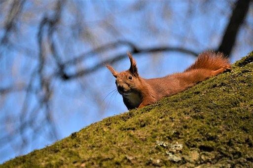 Squirrel, Spring, Walk In The Park, Hammer Park