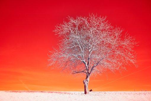 Tree, Branches, Desert, Horizon, Dog, Landscape