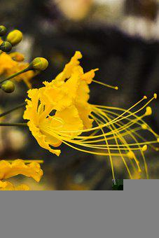 Yellow Flowers, Pistils, Yellow Petals, Bloom, Blossom