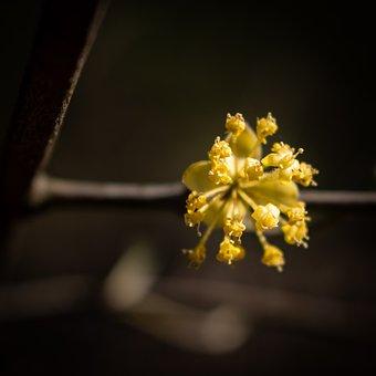Background, Beautiful, Botanical, Branch, Closeup