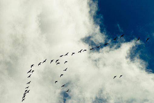 Spring Migration, Sky, Clouds, The Light Of The Sun