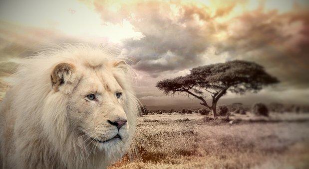 Lion, Animal, Africa, Wildlife, Predator, Feline, Mane