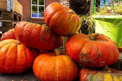 Pumpkin, Vegetables, Harvest, Halloween, Autumn