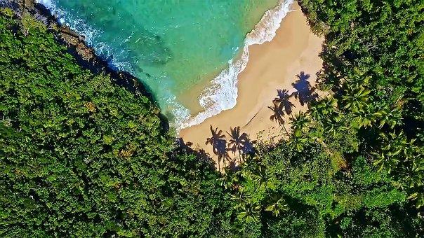 Beach, Coast, Sea, Palm Trees, Trees, Sand, Coastline