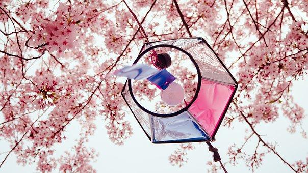 Cherry Blossoms, Sakura, Tree, Flowers, Branch, Plant