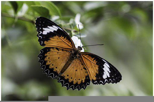 Animal, Beautiful Animal, Butterfly