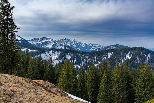 Mountain Ranges, Snow Mountains, Conifers, Coniferous