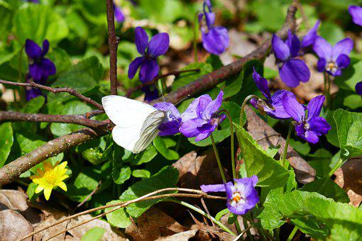 Nature, Spring, Butterfly, Flowers, Forest, Bloom