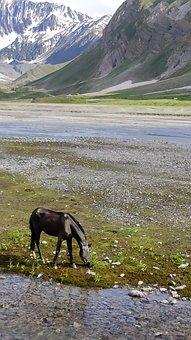 Horse, Grazing, Mountains, Natural, Himalaya