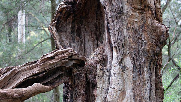 Gnarly, Rugged, Tree, Bark, Texture, Weathered