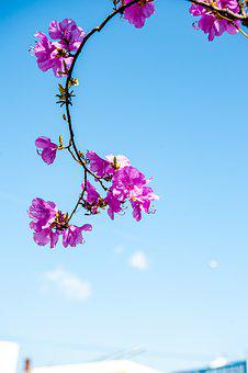 Cherry Blossom, Flowers, Spring, Branch, Sky