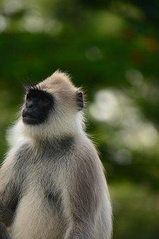 Monkey, Primate, Wild, Wild Animal, Furry, Portrait