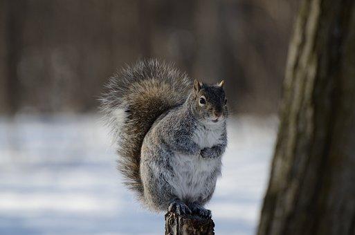 Squirrel, Animal, Nature, Cute, Snow, Fur, Winter